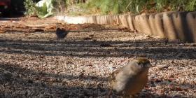 Comment se débarrasser des oiseaux aves