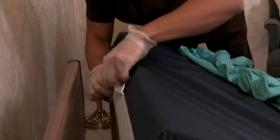 Comment se débarrasser des punaises de lit cimex lectularius