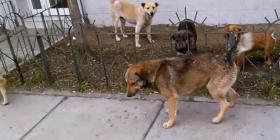 Informations sur les chiens canis lupus