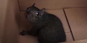 Informations sur les écureuils sciuridae