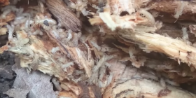 Informations sur les termites isoptera