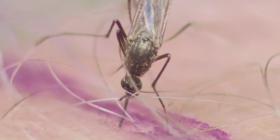 Prévenir l'infestation de moustiques culicidae