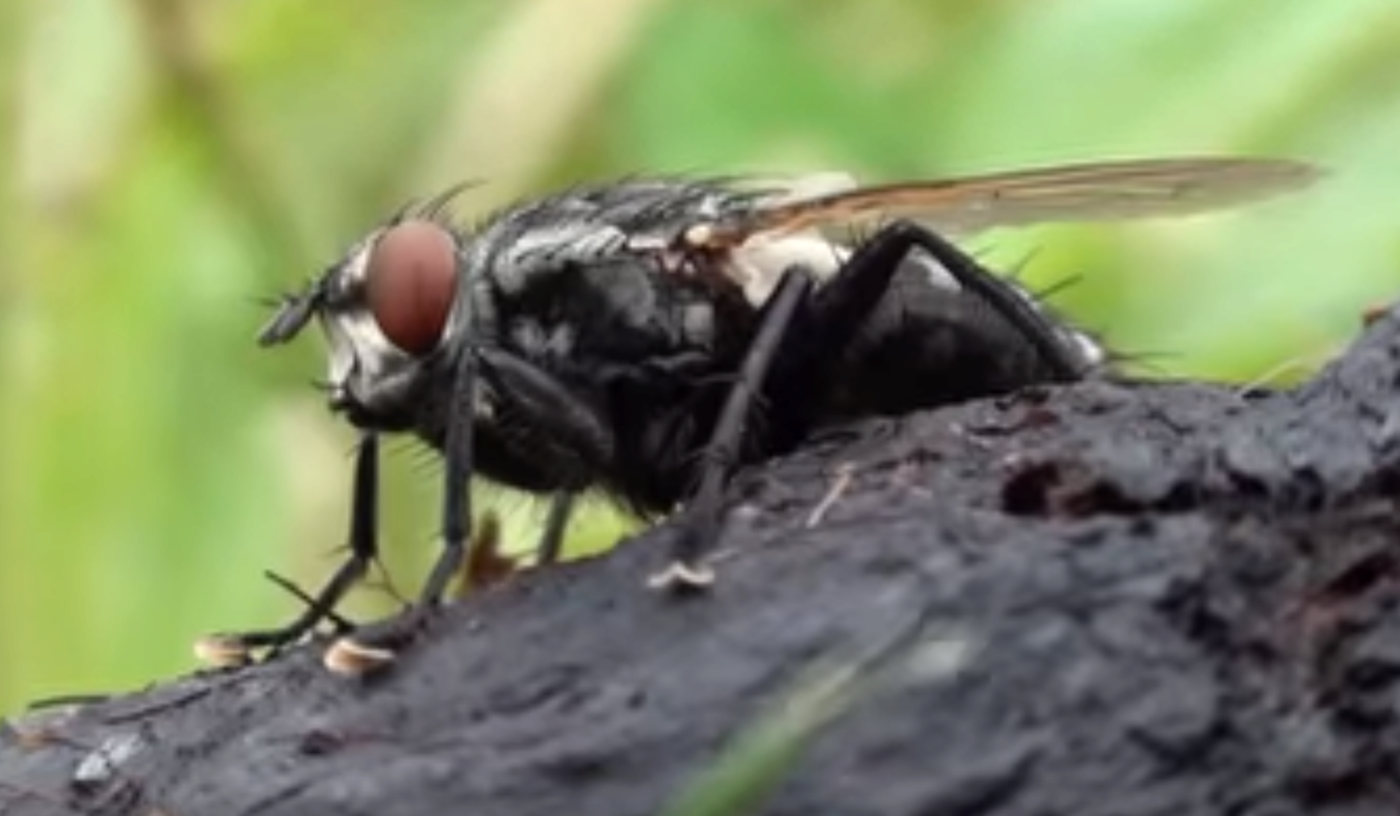 Comment Se Débarrasser De Moucherons Naturellement comment se débarrasser des mouches domestiques, contrôle de
