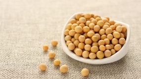 soja glycine max traitements plus courantes maladies ravageurs plante technique