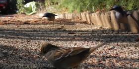 birds aves prevent infestation with