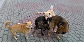 dogs canis lupus prevent infestation with