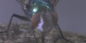 flies house diptera prevent infestation with