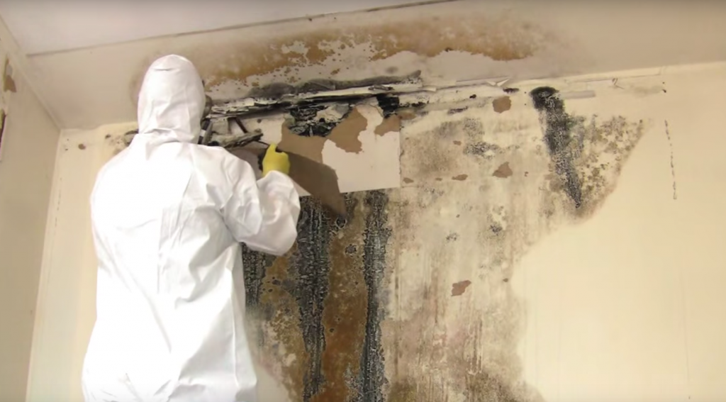 mold fungus how to get rid of how to get rid of mold protect yourself