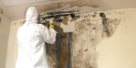 mold fungus how to get rid of