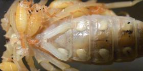 scorpions arachnida prevent infestation with