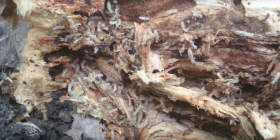 termites isoptera prevent infestation with
