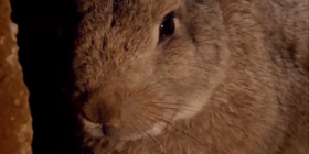 how to get rid of rabbits oryctolagus cuniculus