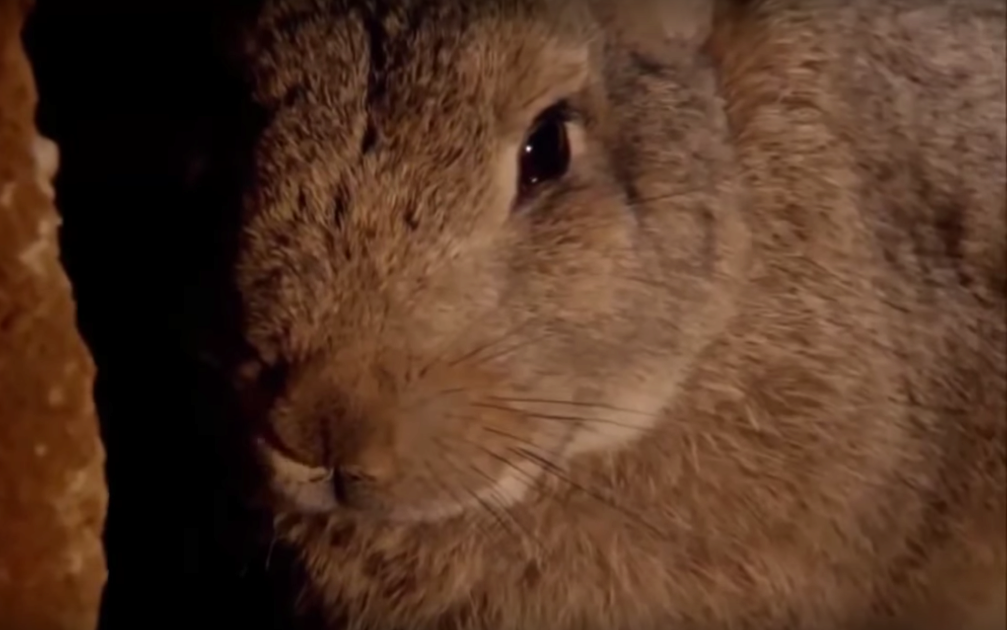 How to get rid of Rabbits, protect yourself from Oryctolagus ...