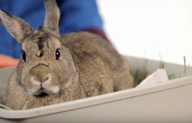 prevent infestation with rabbits oryctolagus cuniculus