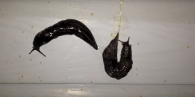 slugs gastropoda prevent infestation with