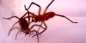 spiders araneae how to get rid of