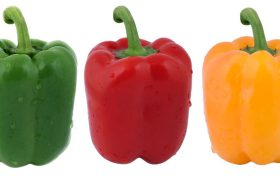 pepper capsicum annuum treatments, most common diseases and pests of this vegetable