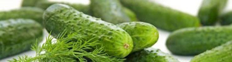 vegetable pests and diseases pdf