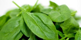 spinach spinacia oleracea treatments common diseases pests vegetable