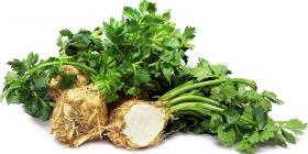 celery apium graveolens treatments common diseases pests vegetable