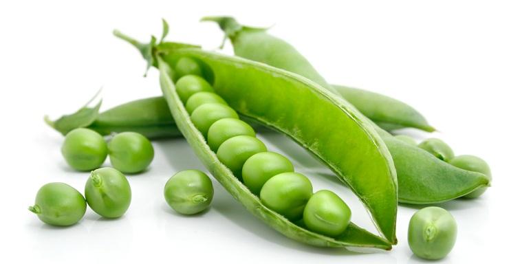peas pisum sativum treatments common diseases pests vegetable.jpg