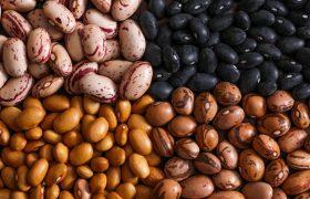 beans phaseolus vulgaris
