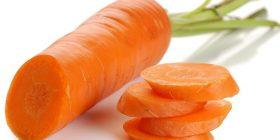 carrot daucus carota