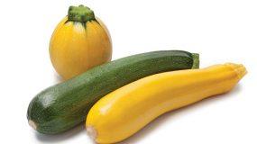 zucchini cucurbita pepo