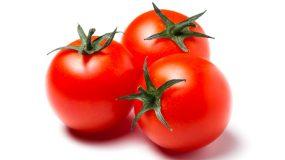 tomatoes solanum lycopersicum