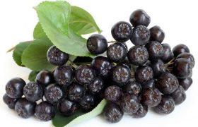 chokeberry aronia