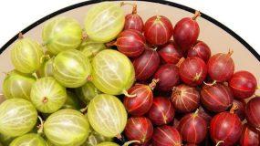 gooseberry ribes uva-crispa