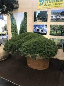 IPM Essen 2019 Bonsai 2