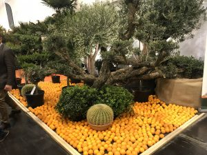 IPM Essen 2019 Bonsai
