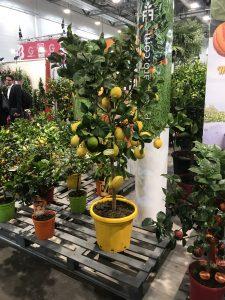 IPM Essen 2019 citrus 2