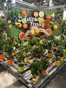 IPM Essen 2019 citrus plants