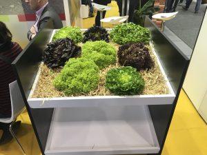 Fruit Logistica 2019 lettuce