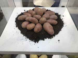 Fruit Logistica 2019 red potatoes