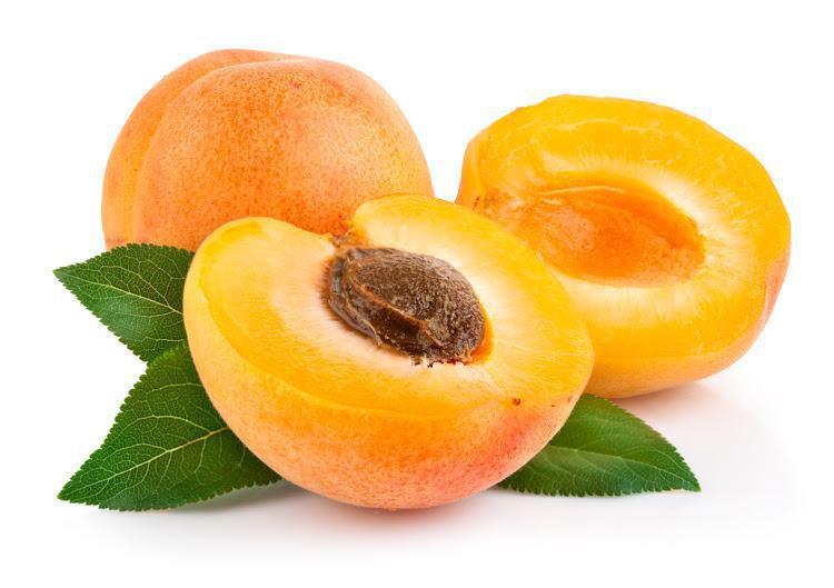 apricot tree prunus armeniaca