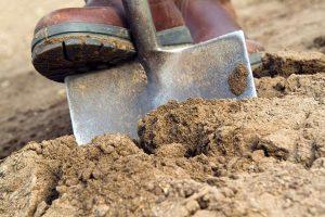 plum tree prunus domestica - preparing the soil