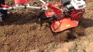 sweet corn zea mays saccharata - preparing the soil