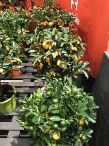IPM Essen 2020 Citrus 1