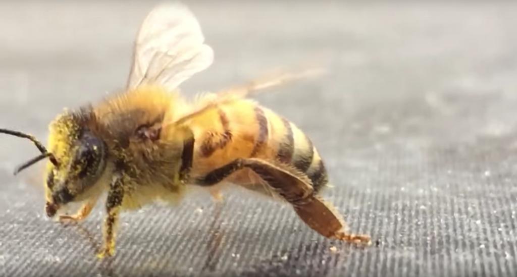 Albine Anthophila Prevenirea infestării cu
