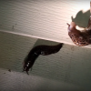 Limacsi Gastropoda Cum să scapi de