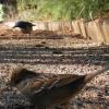 Pasari Aves Prevenirea infestării cu