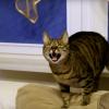 Pisici Felis Catus Cum să scapi de