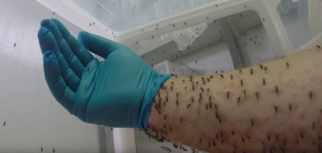 vedere la țânțari noaptea