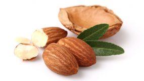 Migdal Prunus dulcis