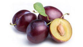 Prune Prunus domestica