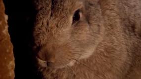 conejos oryctolagus cuniculus como eliminar los