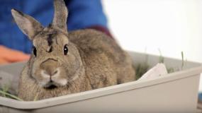 conejos oryctolagus cuniculus como prevenir la plaga de